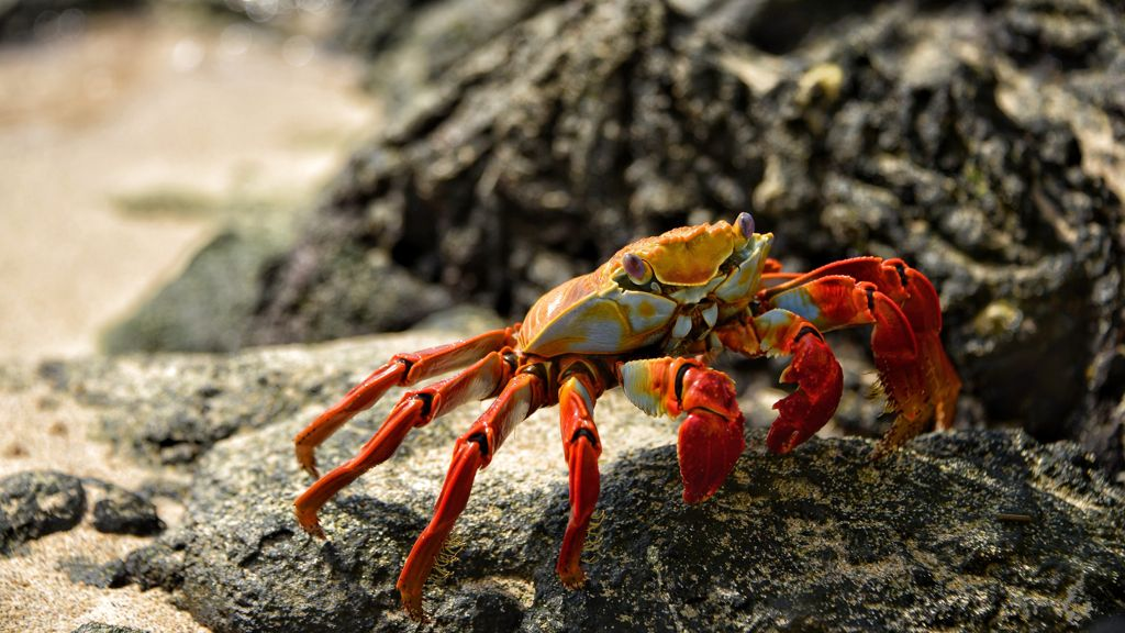 crab is a rich source of mineralas essentials to boost testosterone